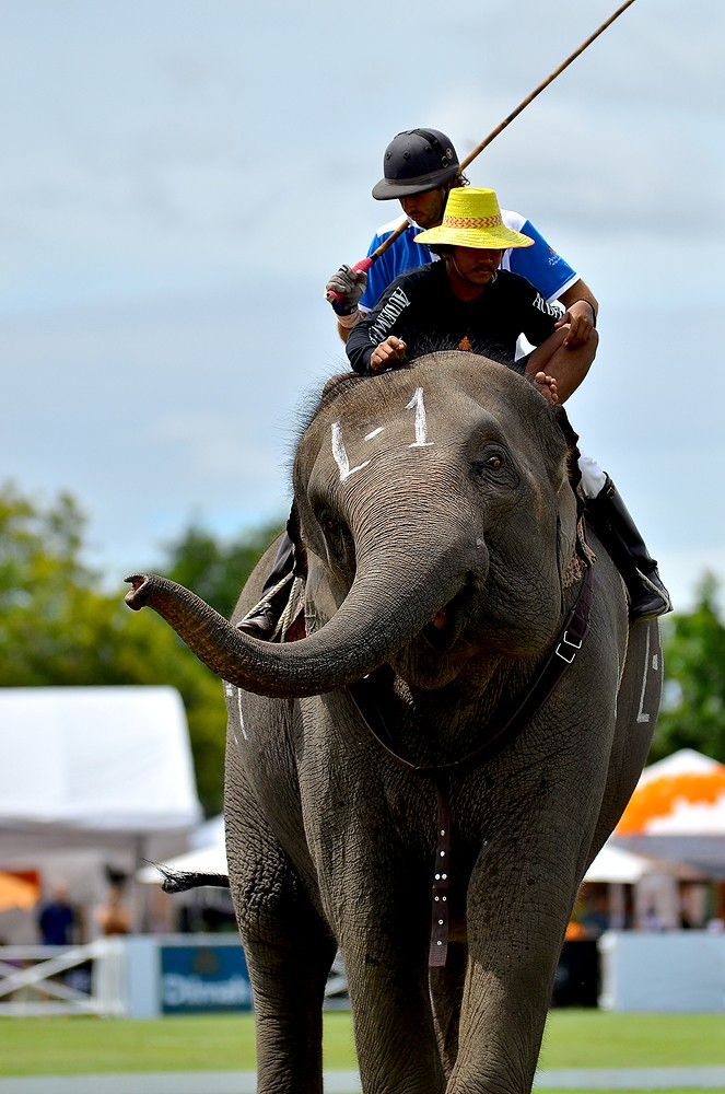 Elephant Polo Tournament in Bangkok