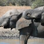 Win a Family Safari for Four in African Safari Video Competition