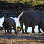 Win a Family South African Safari for Four in Africa Safari Contest