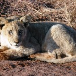 Your chance to get close to the Africas animals with the African Safari contest